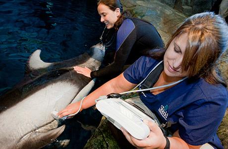 Aquatic Animal Health