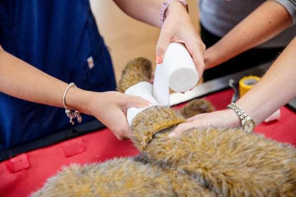 Clinical skills/bandaging